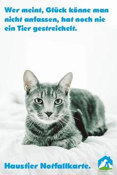 Katzenbilder Zum Ausdrucken Inspirierend 684 Besten Haustier Notfallkarte Bilder Auf Pinterest In 2018 Galerie