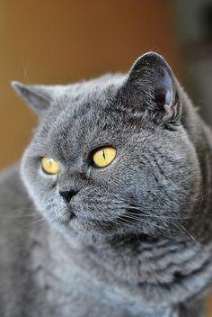 Katzenbilder Zum Ausdrucken Neu 113 Besten Katzen Bilder Auf Pinterest In 2018 Das Bild