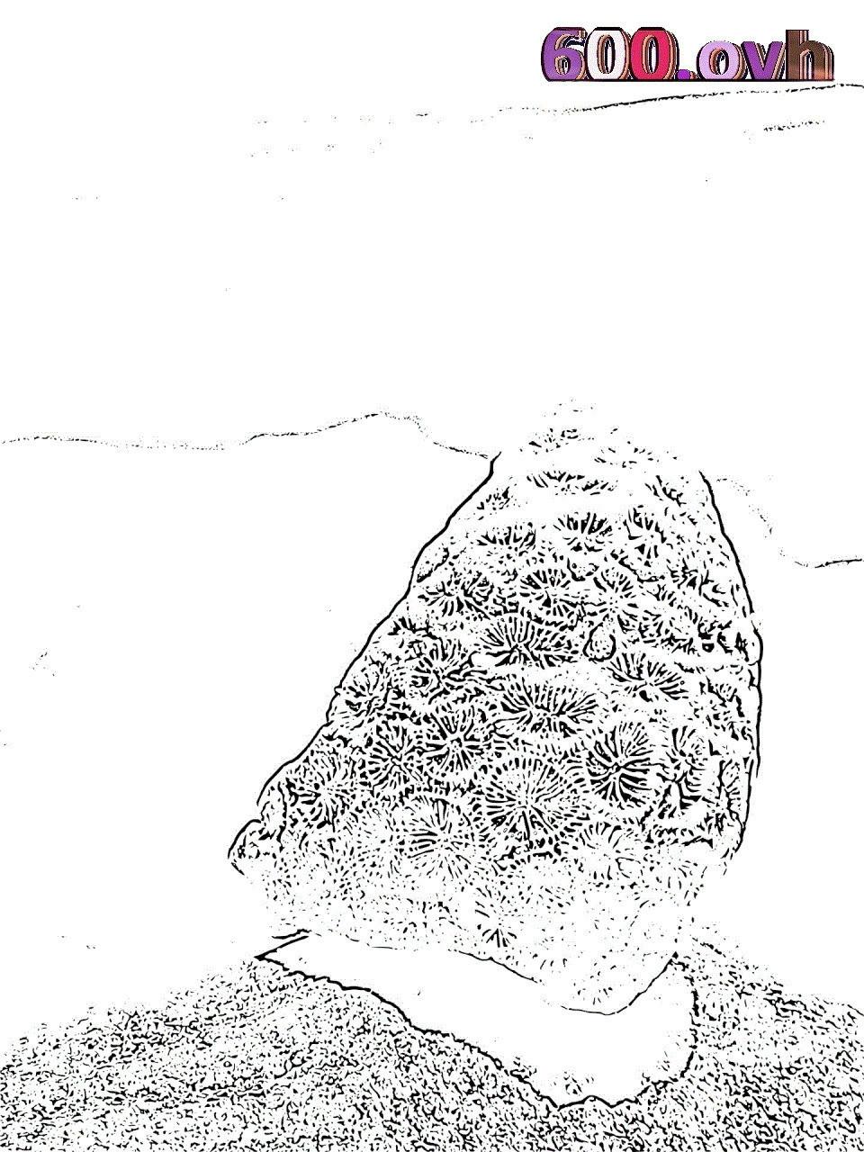 Kinder Schwimmen Ausmalbild Einzigartig 45 Frisch Korallen Malvorlagen Mickeycarrollmunchkin Schön Stock