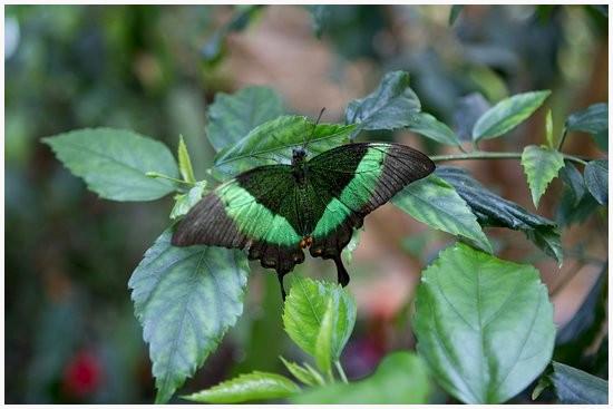 Kleeblatt Zum Ausdrucken Frisch Schmetterlinge Zum Ausdrucken Machen Kleeblatt Vorlage Ausdrucken Sammlung
