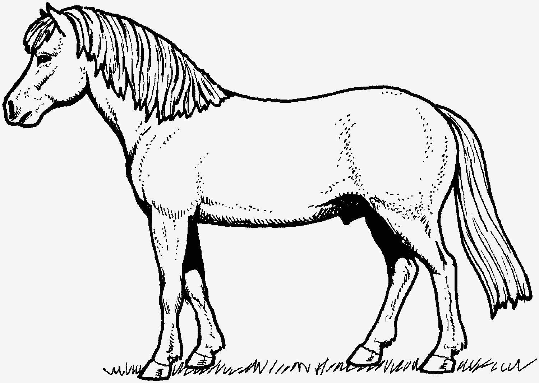 Leo Lausemaus Ausmalbilder Genial Pferde Ausmalbilder Verschiedene Bilder Färben 34 Neu Lager Von Leo Bild