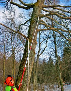 Malvorlage Baum Mit Wurzeln Das Beste Von 27 Beste Malvorlage Baum Mit ästen Idee Fotografieren
