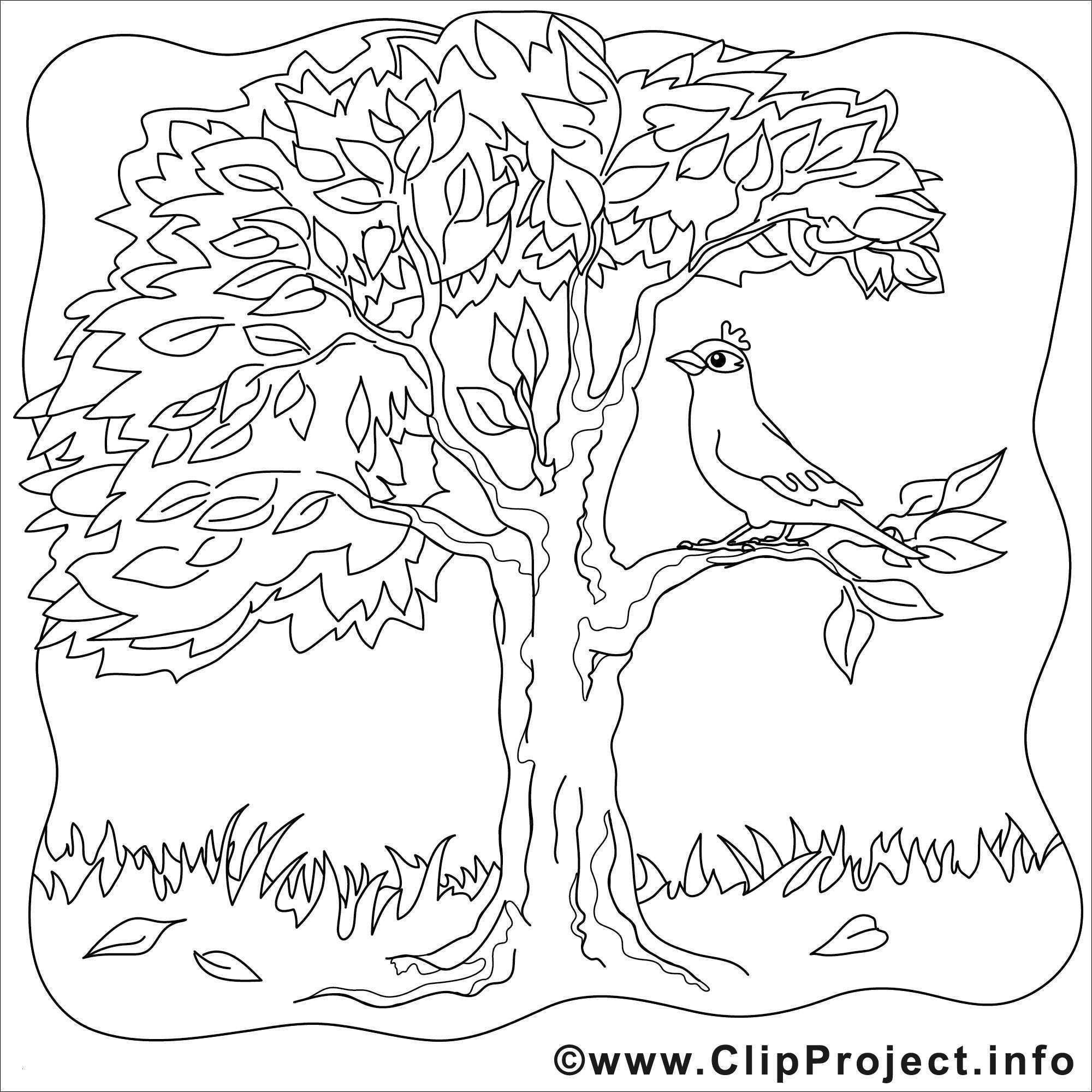 Malvorlage Baum Mit Wurzeln Das Beste Von Kahler Baum Malvorlage Aufnahme 40 Malvorlagen Herbst Baum Bild