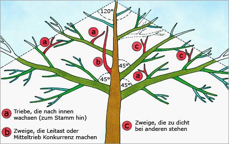 Malvorlage Baum Mit Wurzeln Einzigartig 27 Beste Malvorlage Baum Mit ästen Idee Das Bild