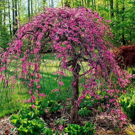 Malvorlage Baum Mit Wurzeln Frisch 27 Beste Malvorlage Baum Mit ästen Idee Bilder