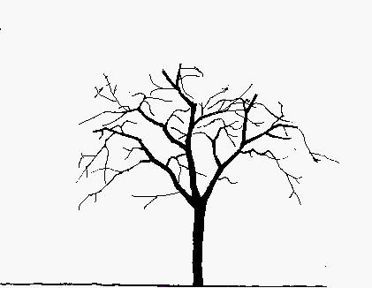 Malvorlage Baum Mit Wurzeln Frisch 27 Beste Malvorlage Baum Mit ästen Idee Stock