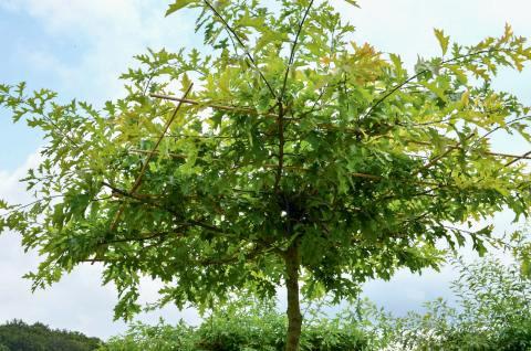 Malvorlage Baum Mit Wurzeln Genial 27 Beste Malvorlage Baum Mit ästen Idee Fotos