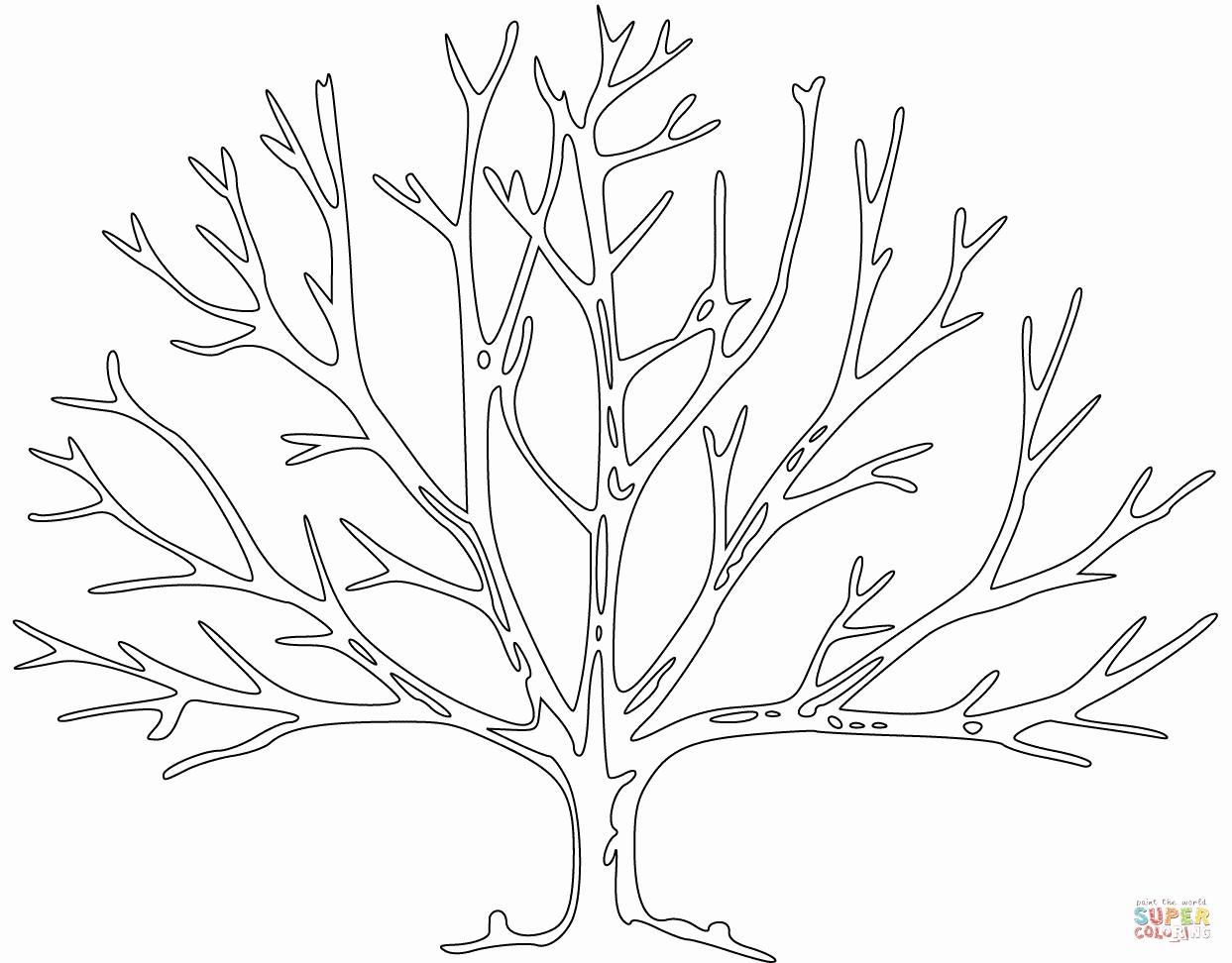 Malvorlage Baum Mit Wurzeln Inspirierend Kahler Baum Malvorlage Genial Fläktgroup Fläktgroup Ahoaho Expo Bilder