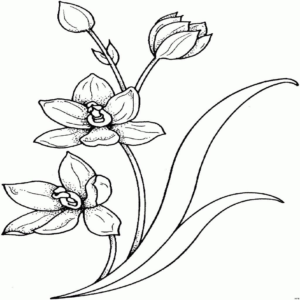 Malvorlage Blumen ornamente Genial 40 Malvorlagen Blumen Ranken forstergallery Sammlung
