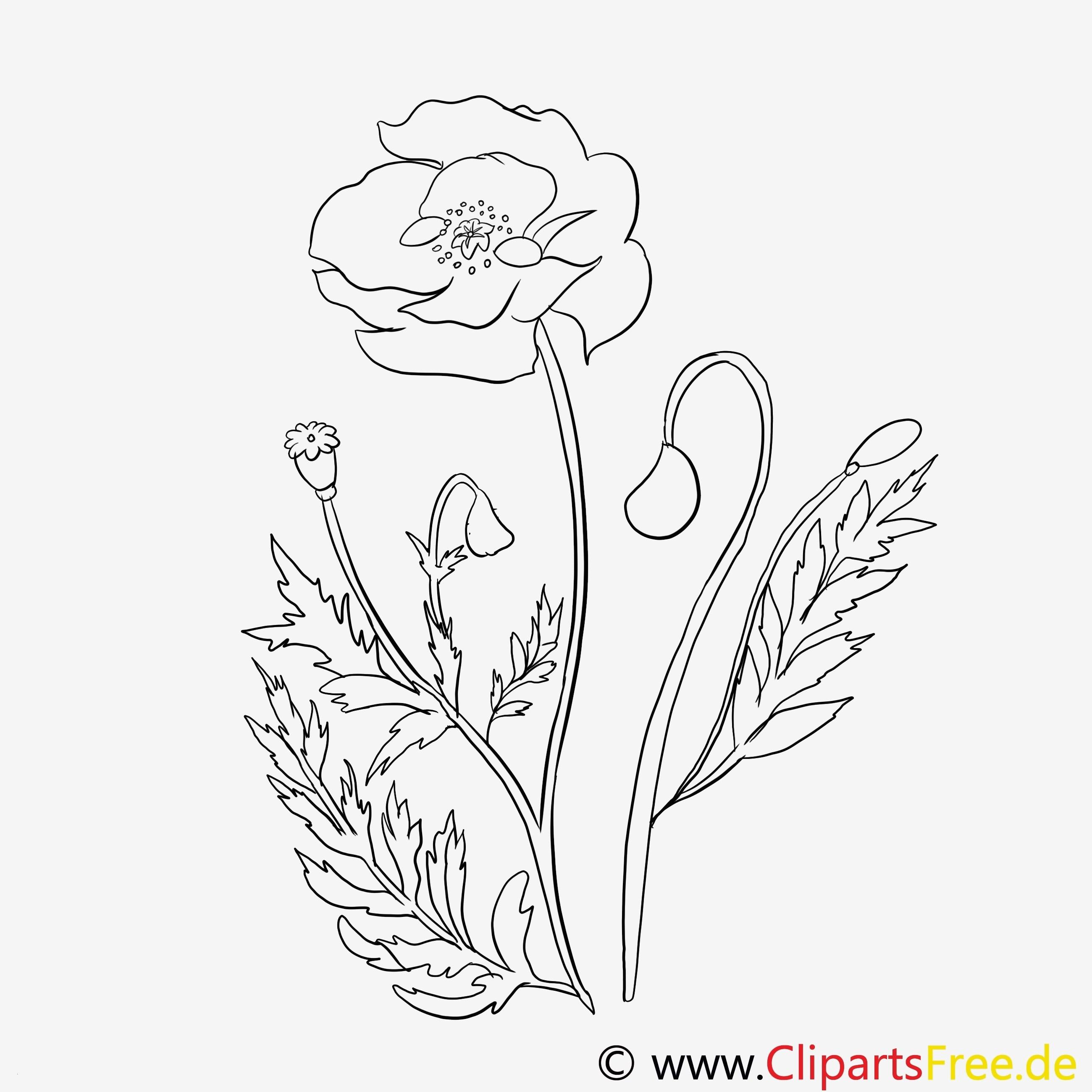 Malvorlage Blumen ornamente Inspirierend 28 Schön Gratis Malvorlagen Blumen Mickeycarrollmunchkin Fotos