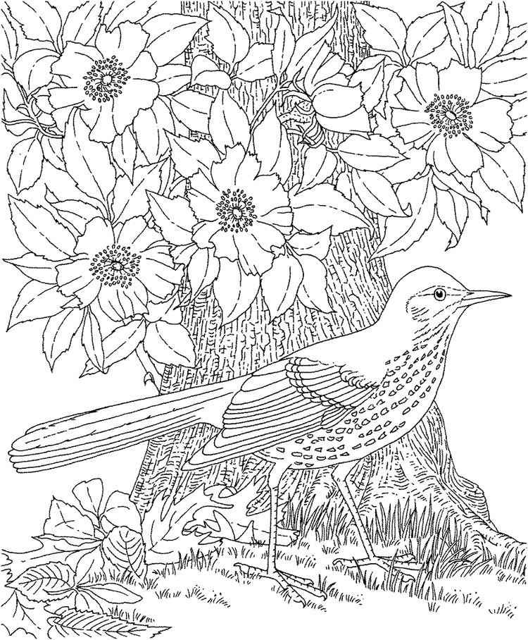 Malvorlage Blumen ornamente Inspirierend Ausmalbilder Erwachsene Natur Bilder Ideen Bild