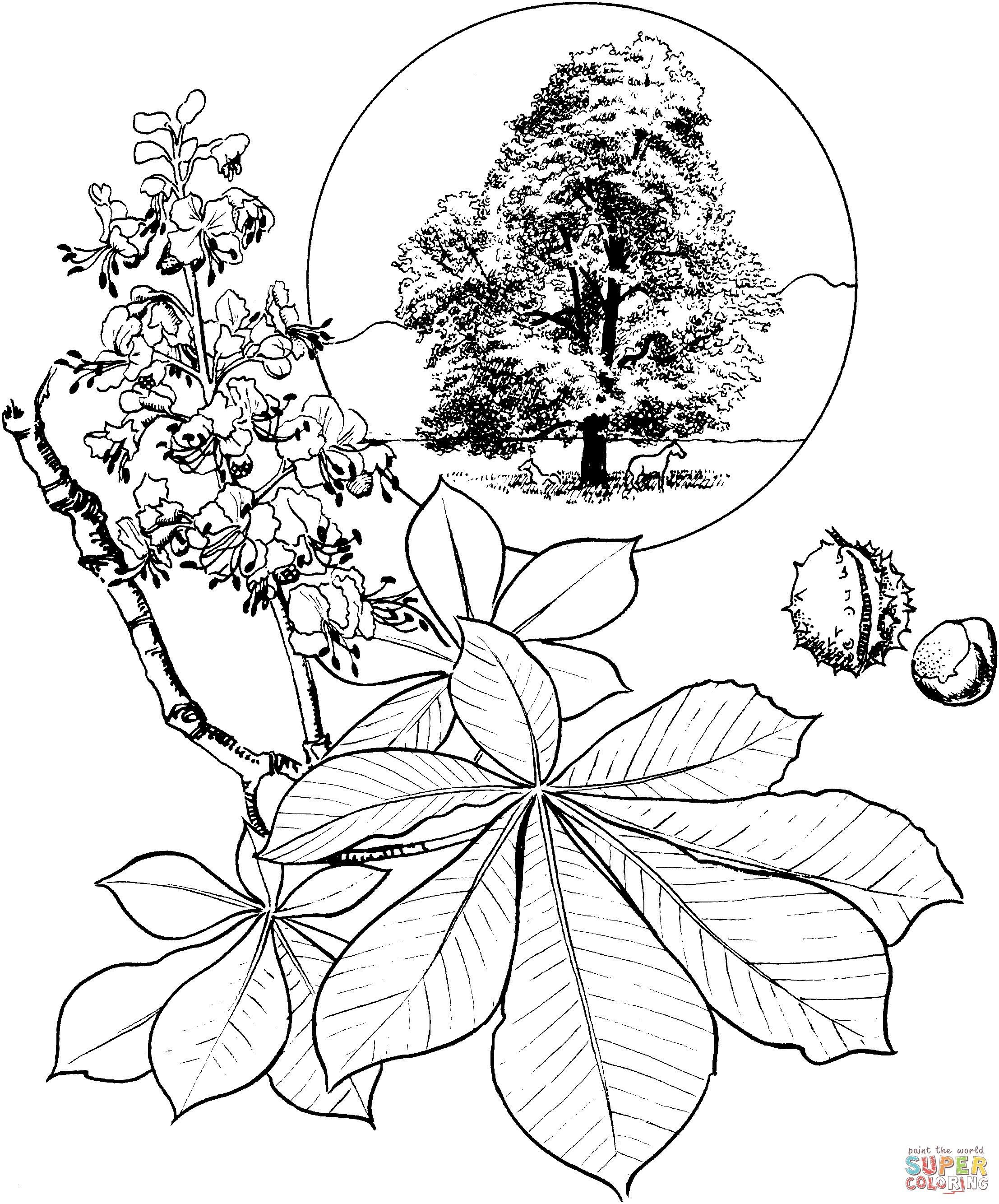 Malvorlage Blumen ornamente Neu 35 Kastanien Ausmalbilder Scoredatscore Neu Gratis Malvorlagen Sammlung