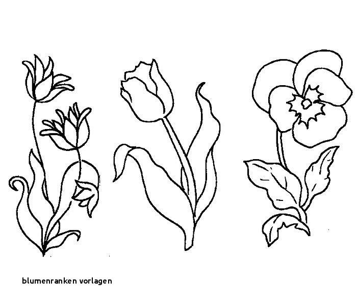 Malvorlagen Blumen Ranken Frisch Blumenranken Vorlagen S S Media Cache Ak0 Pinimg originals 89 0d 6b Galerie