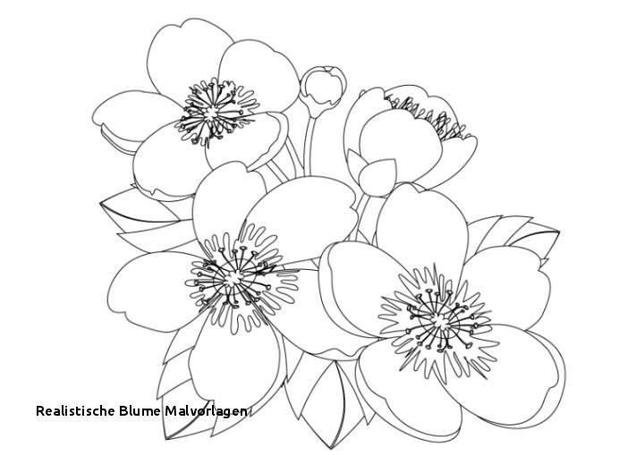Malvorlagen Blumen Ranken Genial Ausmalbilder Blumen Galerie