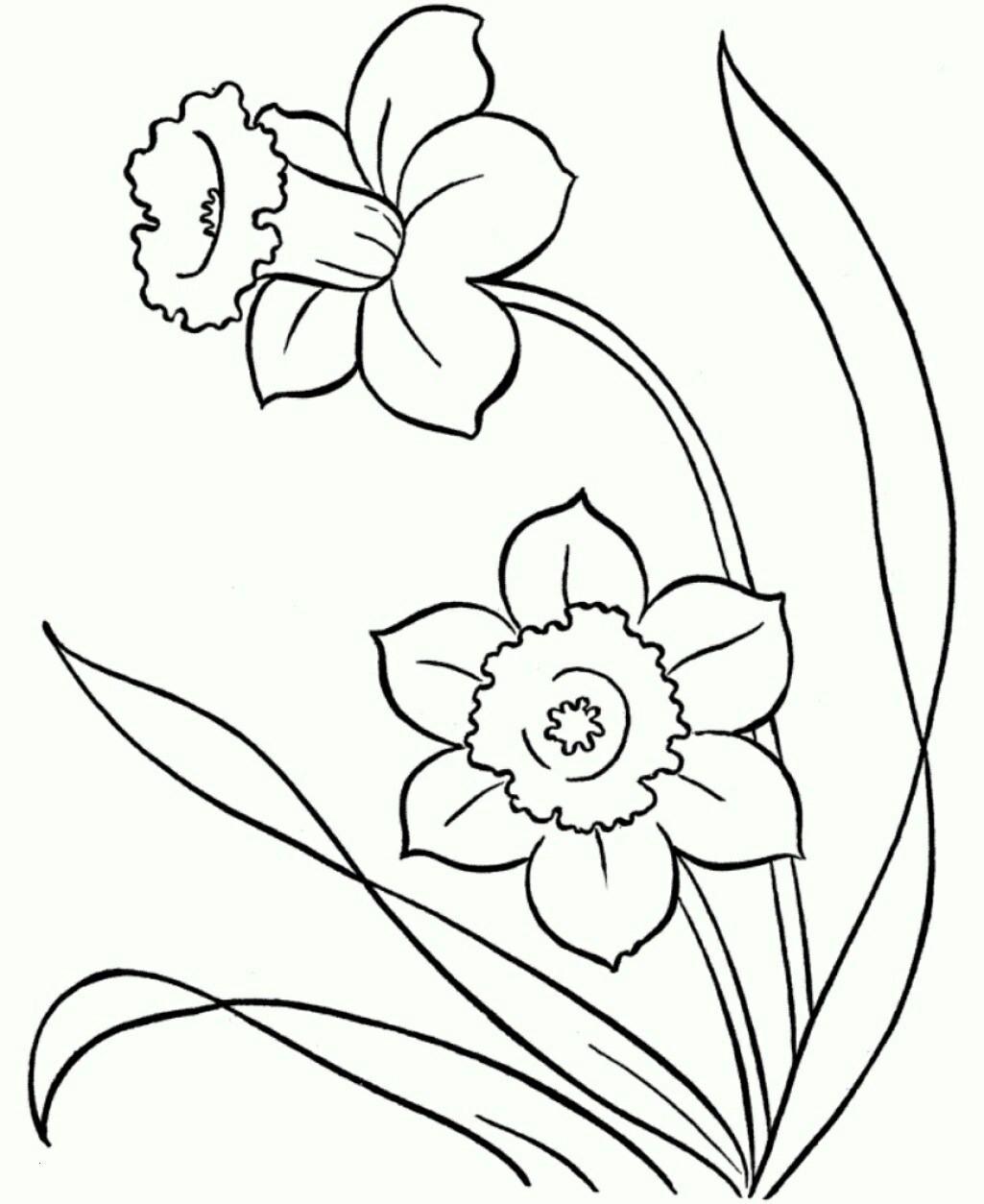 Malvorlagen Blumen Ranken Kostenlos Frisch 47 Schön Blumen Malvorlagen Beste Malvorlage Das Bild