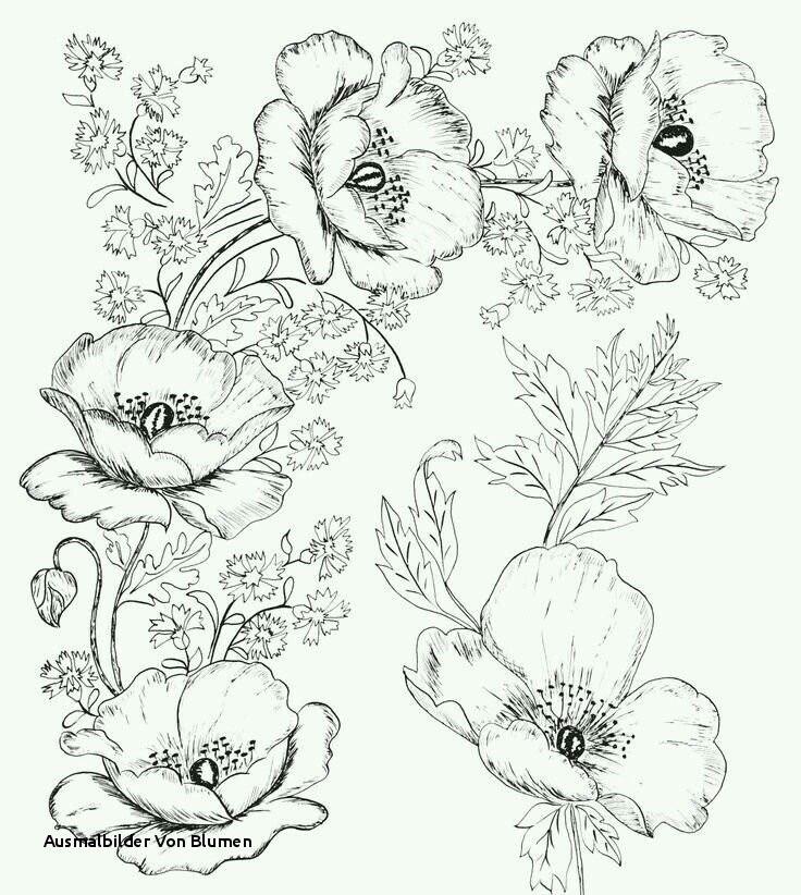 Malvorlagen Blumen Ranken Kostenlos Frisch Ausmalbilder Von Blumen Ausmalbilder Blumen Und Biene 01 Sammlung