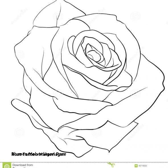 Malvorlagen Blumen Rosen Das Beste Von Blumen Malvorlagen Rose Rose Tattoo Malvorlagen 17 Best Ausmalbilder Stock