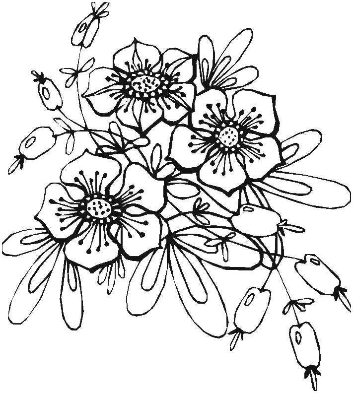 Malvorlagen Blumen Rosen Das Beste Von Malvorlagen Blumen Blumenmotive Zum Ausmalen Stickerei Pinterest Fotografieren