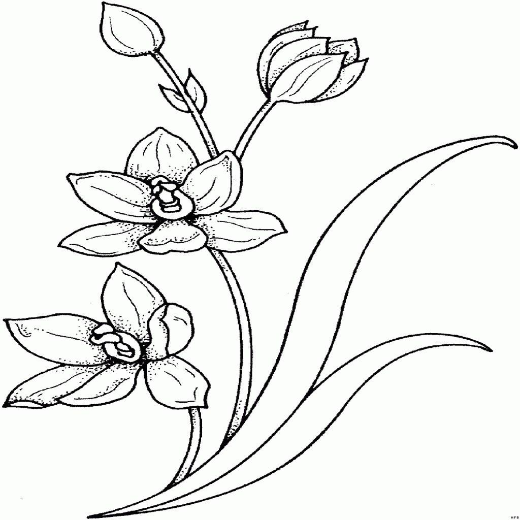 Malvorlagen Blumen Rosen Das Beste Von Malvorlagen Rosen Inspirierend 40 Ausmalbilder Rosen Scoredatscore Bild