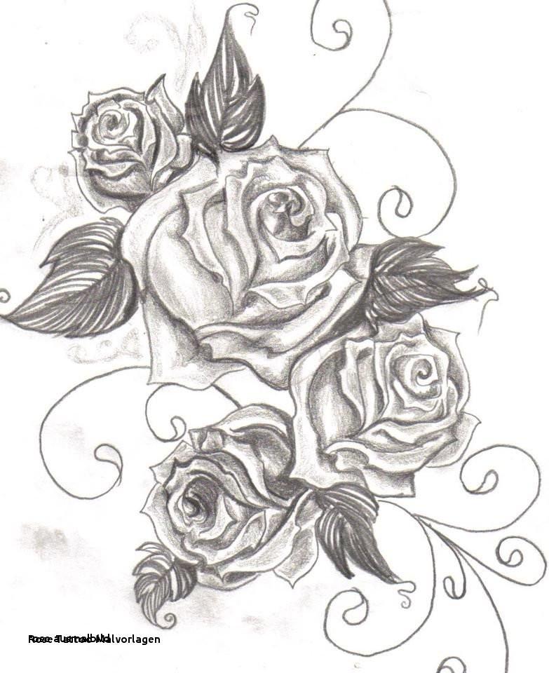 Malvorlagen Blumen Rosen Das Beste Von Rose Ausmalbild Malvorlagen Bilder Uploadertalk Paintcolor Fotos