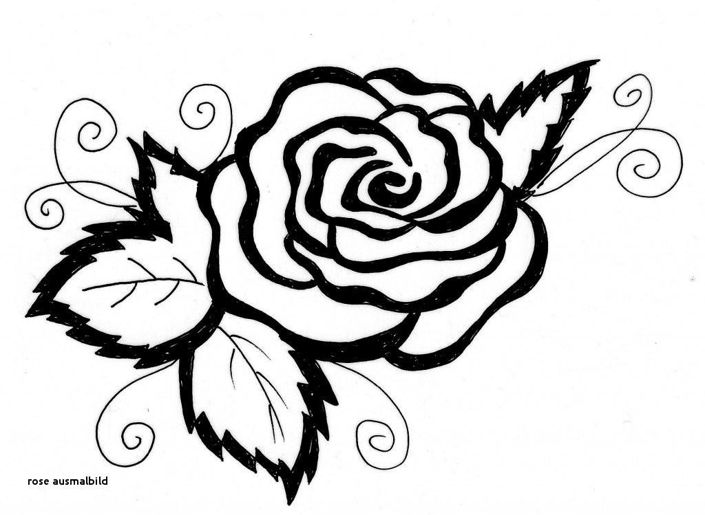 Malvorlagen Blumen Rosen Das Beste Von Rose Ausmalbild Malvorlagen Bilder Uploadertalk Paintcolor Stock