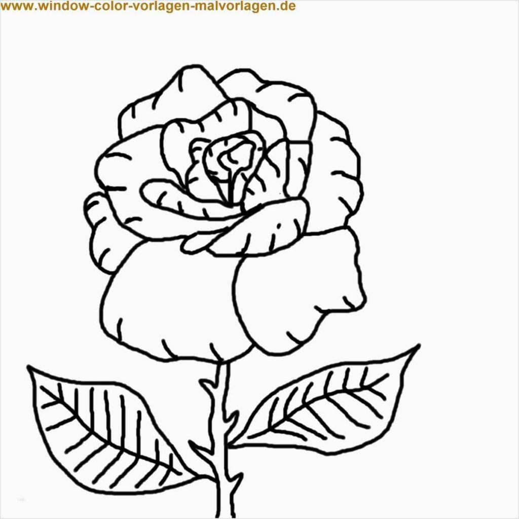 Malvorlagen Blumen Rosen Frisch Janbleil Malvorlage Quelle Inspirierend Malvorlagen Blumen Rosen Sammlung