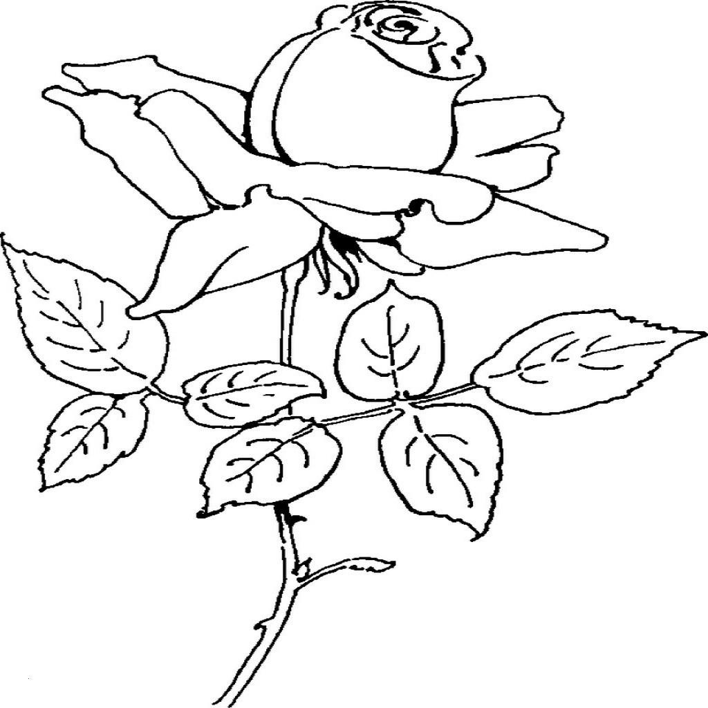 Malvorlagen Blumen Rosen Frisch Malvorlagen Rose Einfach Malvorlagen Blumen Rosen – Malvorlagen Stock