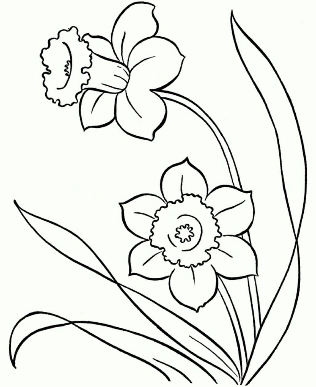 Malvorlagen Blumen Rosen Genial Malvorlagen Rosen Inspirierend 40 Ausmalbilder Rosen Scoredatscore Sammlung