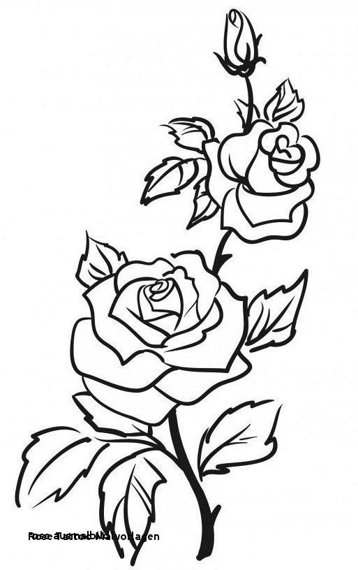 Malvorlagen Blumen Rosen Genial Rose Ausmalbild Malvorlagen Bilder Uploadertalk Paintcolor Fotografieren