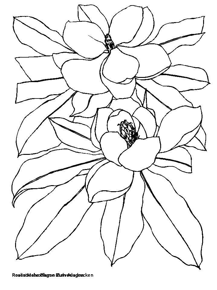 Malvorlagen Blumen Rosen Genial Rosen Malvorlagen Zum Ausdrucken Malvorlagen Blumen Perfect Color Bilder