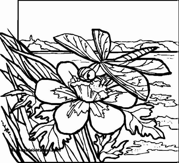 Malvorlagen Blumen Rosen Inspirierend Blumen Malvorlagen Rose Rose Tattoo Malvorlagen 17 Best Ausmalbilder Fotografieren