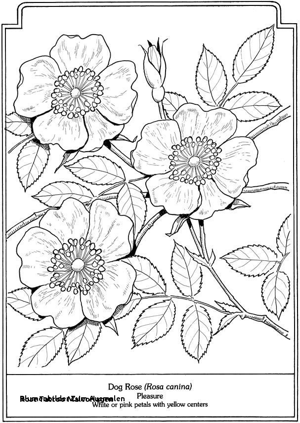 Malvorlagen Blumen Rosen Neu Blumenbilder Zum Ausmalen Rose Tattoo Malvorlagen 17 Best Galerie