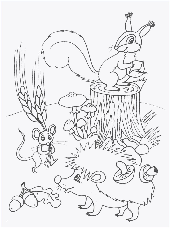 Mandala Herbst Zum Ausdrucken Inspirierend 35 Eichhörnchen Ausmalbilder Zum Ausdrucken Scoredatscore Genial Galerie