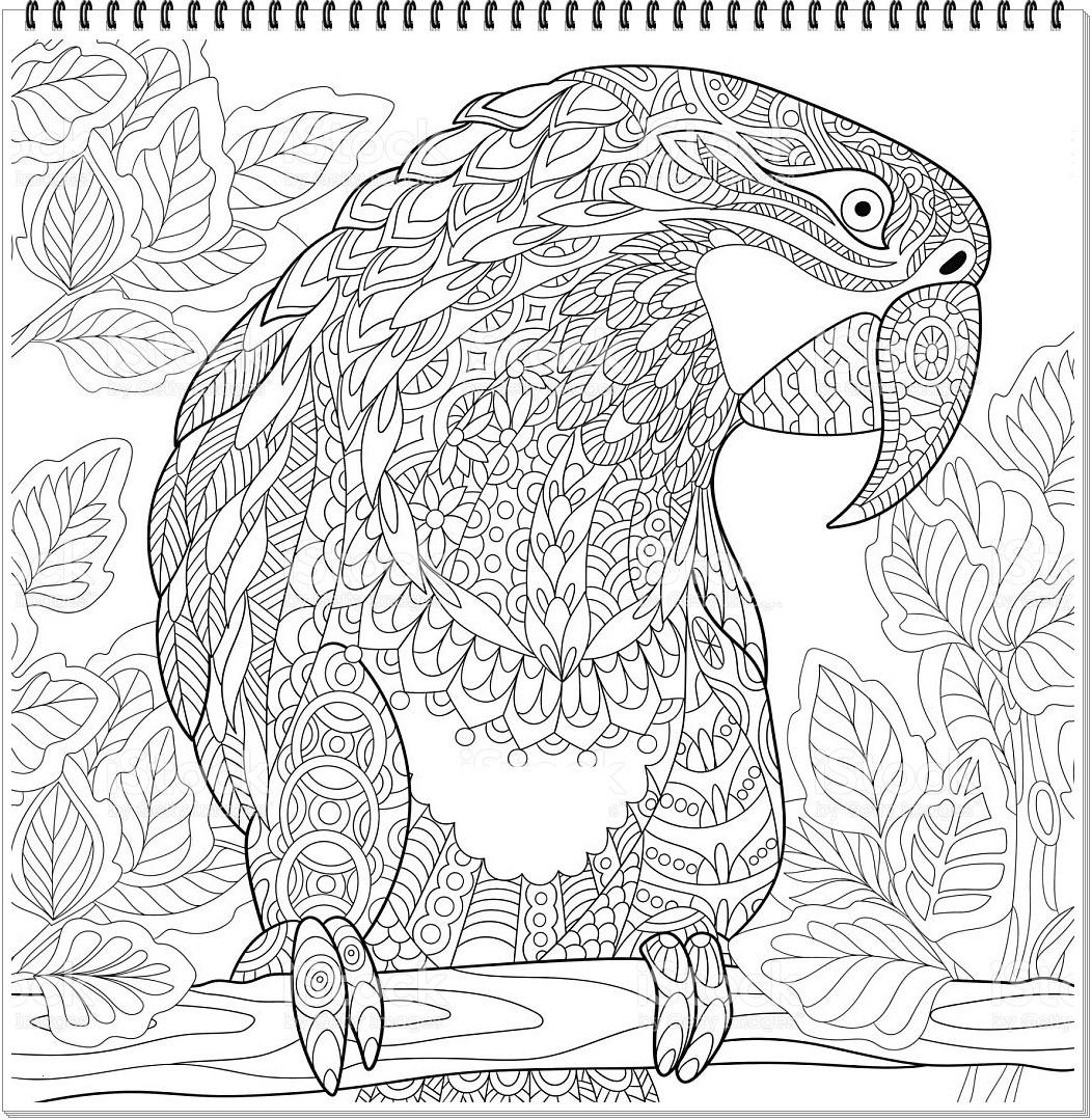Mandala Herbst Zum Ausdrucken Inspirierend Papagei Mandala Ausmalbilder Zum Ausdrucken Parrot Mandala Coloring Das Bild