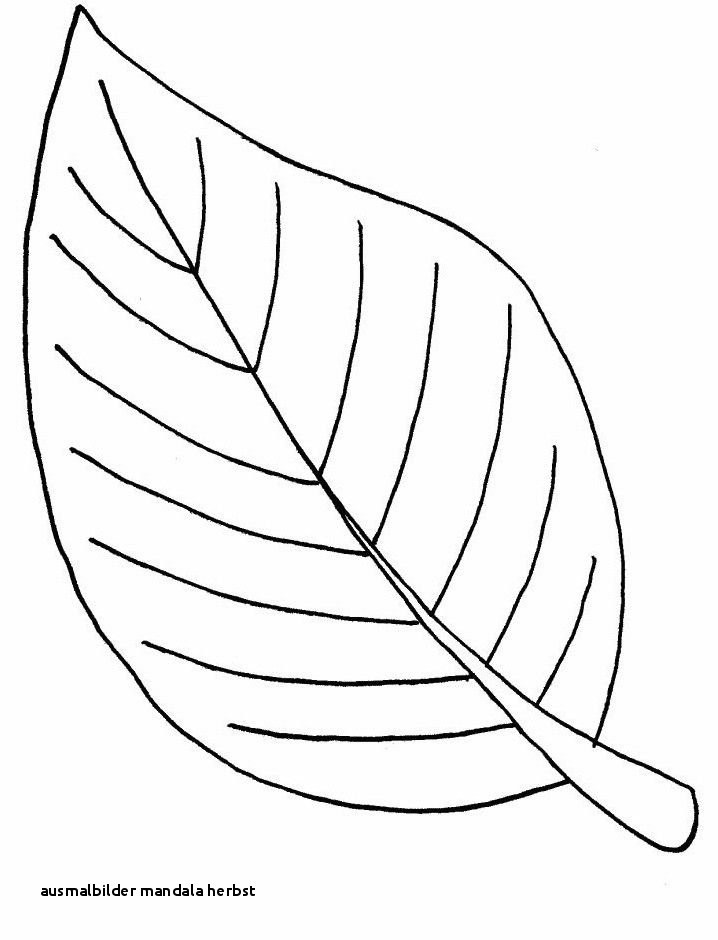 Mandala Herbst Zum Ausdrucken Neu Ausmalbilder Mandala Herbst Malvorlage A Book Coloring Pages Best Stock