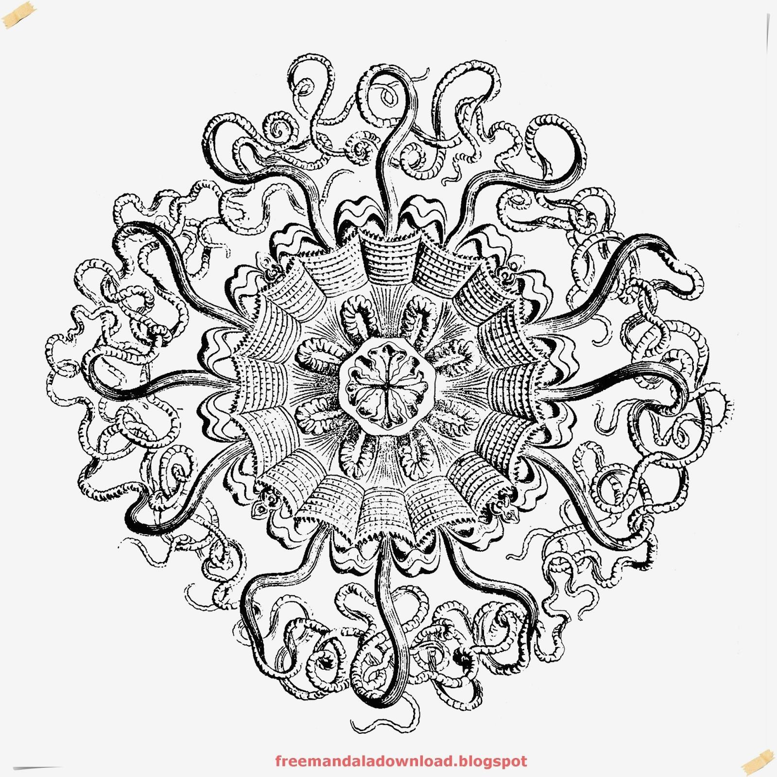 Mandala Zum Ausdrucken Erwachsene Genial Spannende Coloring Bilder Ausmalbilder Für Erwachsene Stock