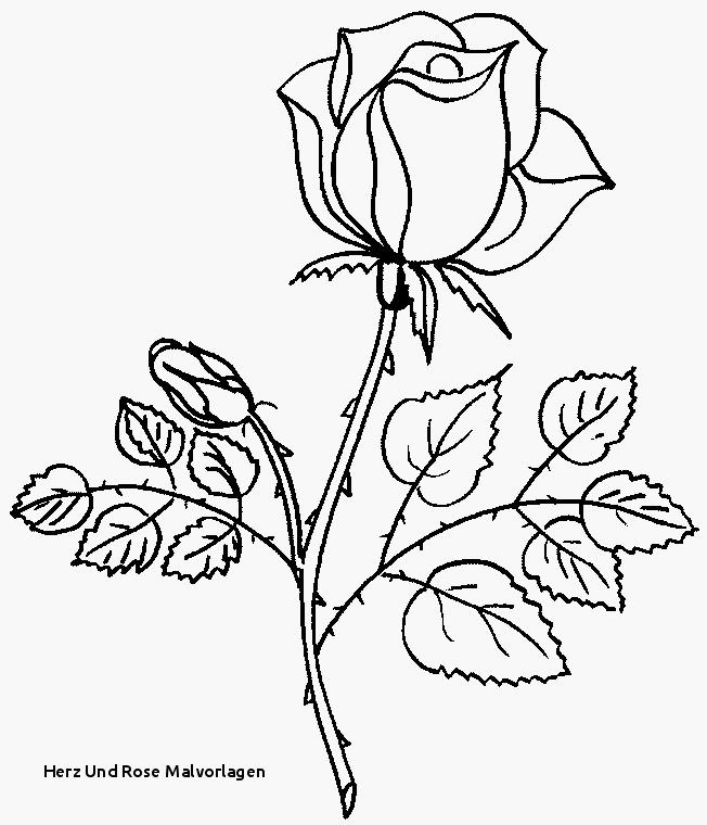 Mandala Zum Ausdrucken Rosen Einzigartig 22 Herz Vorlage Zum Ausdrucken Idee Bilder