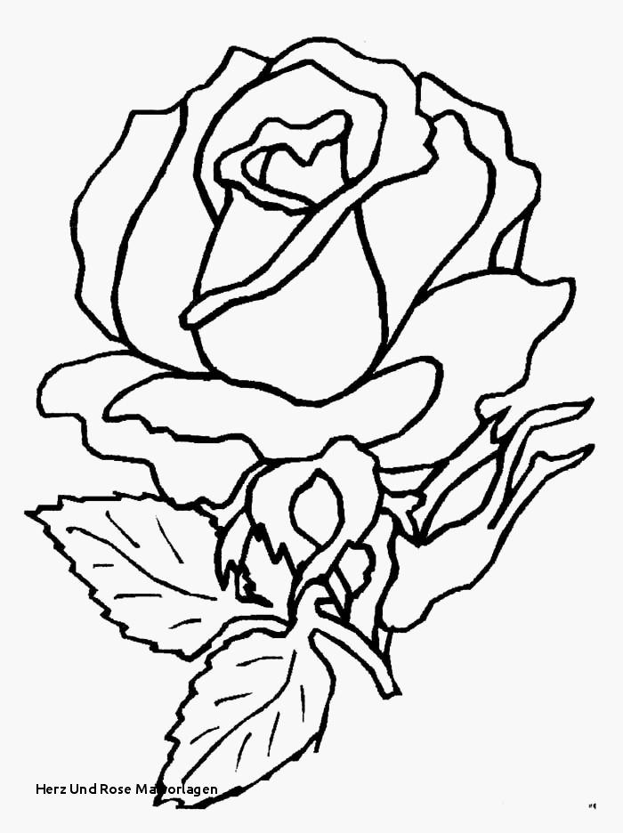 Mandala Zum Ausdrucken Rosen Genial 22 Herz Vorlage Zum Ausdrucken Idee Fotos