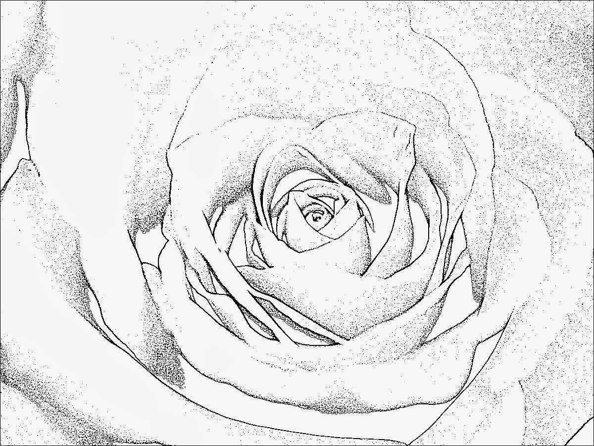 Mandala Zum Ausdrucken Rosen Genial Ausmalbilder Mandala Rosen Vorstellung Love Ausmalbild Malvorlagentv Fotografieren