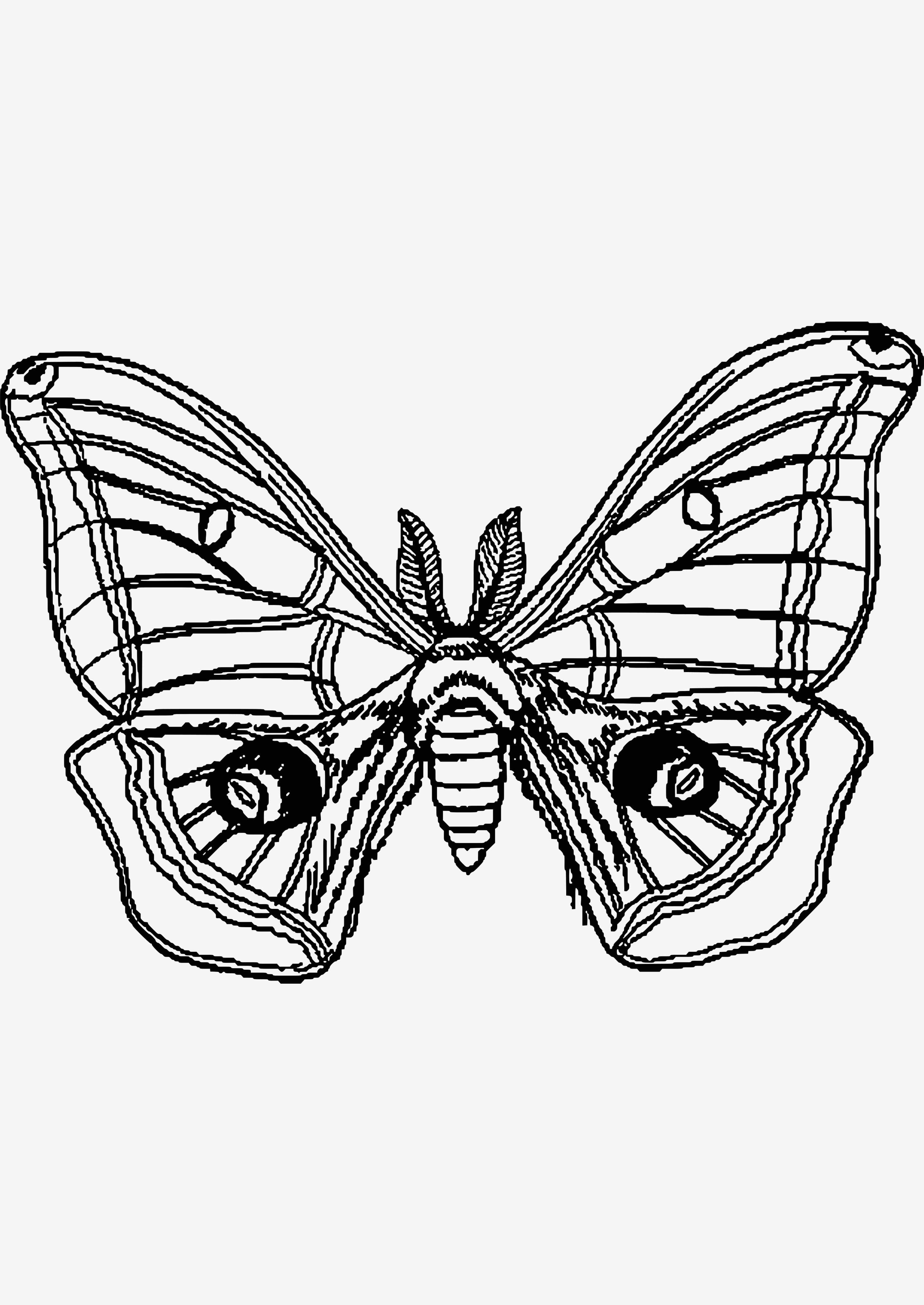 Mandalas Zum Ausmalen Schmetterling Frisch Lernspiele Färbung Bilder Malvorlage Schmetterling Bilder