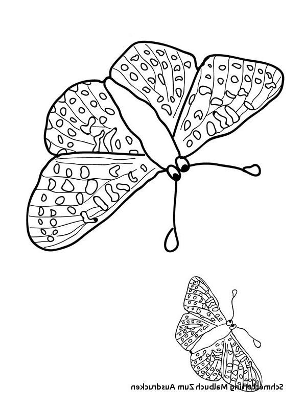 Mandalas Zum Ausmalen Schmetterling Inspirierend 23 Elegant Schmetterlinge Ausmalbilder – Malvorlagen Ideen Bilder
