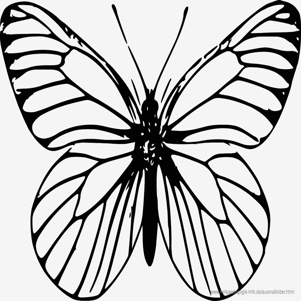Mandalas Zum Ausmalen Schmetterling Neu Bilder Zum Ausmalen Bekommen Malvorlagen Schmetterling Kostenlos Stock