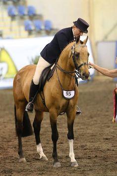 My Little Pony Videos Deutsch Das Beste Von 230 Best German Sport Riding Pony Riding Ponies Images On Pinterest Das Bild