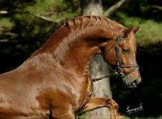 My Little Pony Videos Deutsch Einzigartig 230 Best German Sport Riding Pony Riding Ponies Images On Pinterest Fotografieren