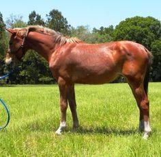 My Little Pony Videos Deutsch Frisch 230 Best German Sport Riding Pony Riding Ponies Images On Pinterest Stock