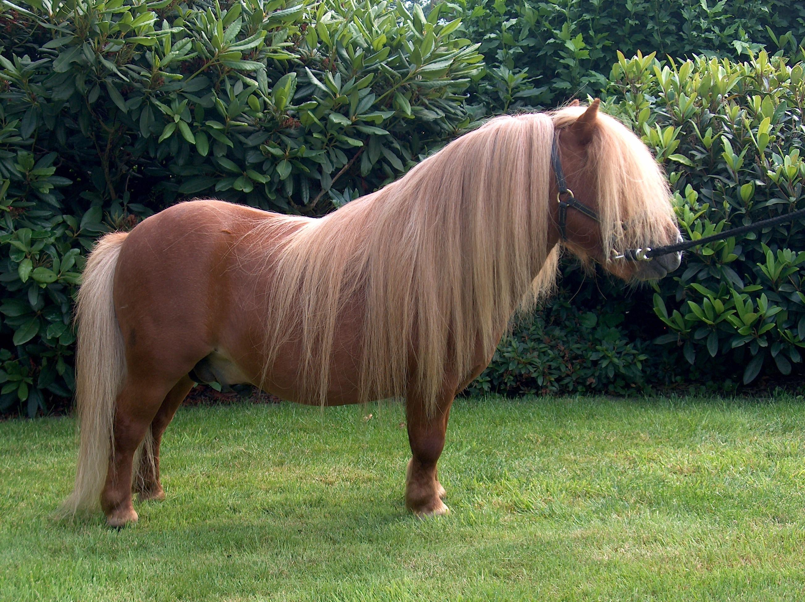 My Little Pony Videos Deutsch Frisch Shetlandpony – Sammlung