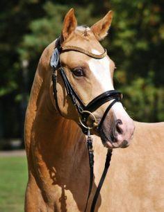 My Little Pony Videos Deutsch Genial 230 Best German Sport Riding Pony Riding Ponies Images On Pinterest Fotos