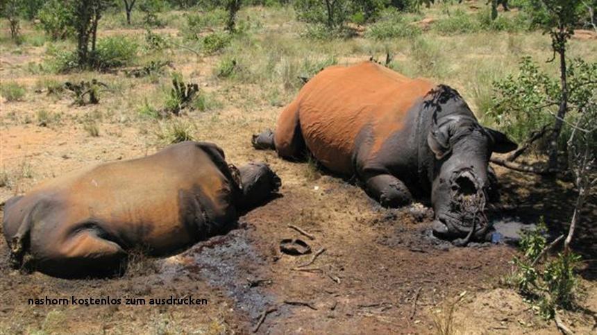 Nashorn Zum Ausmalen Das Beste Von Nashorn Kostenlos Zum Ausdrucken Ausmalbilder Malvorlagen – Nashorn Fotos