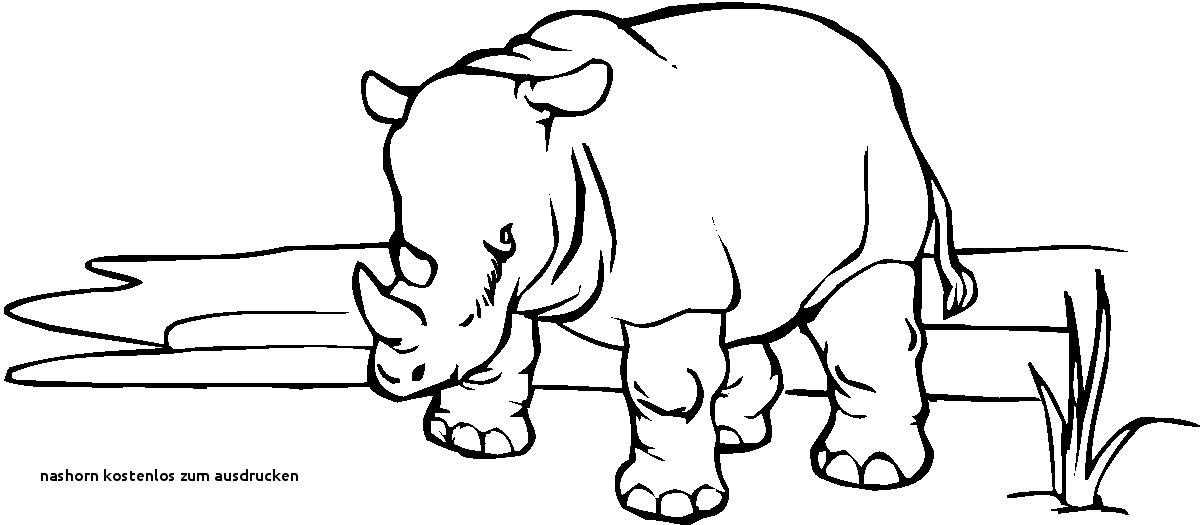 Nashorn Zum Ausmalen Frisch Nashorn Kostenlos Zum Ausdrucken Ausmalbilder Malvorlagen – Nashorn Sammlung
