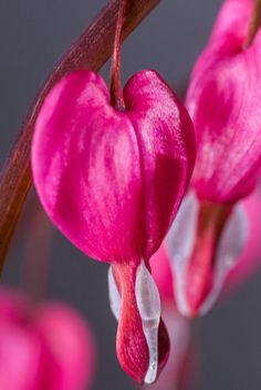 Obst Und Gemüse Ausmalbilder Das Beste Von Die 45 Besten Bilder Von Rosen Schönheiten Im Garten In 2018 Fotografieren